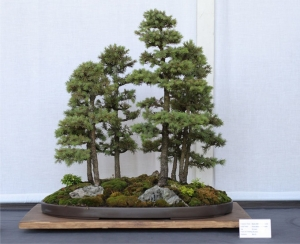 Yoe Ue Bonsai