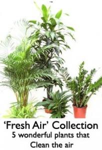 İç Mekan Bitkileri Havayı Nasıl Temizler