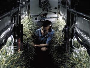 Nasa ilerde dünya dışı yaşam formları yaratmak için geniş bütçeli ciddi çalışmalar yapmaktadır. Yukarıda uzay kapsüllerinde bitki destekli yaşam formu çalışmalarından bir örnek görünmektedir.